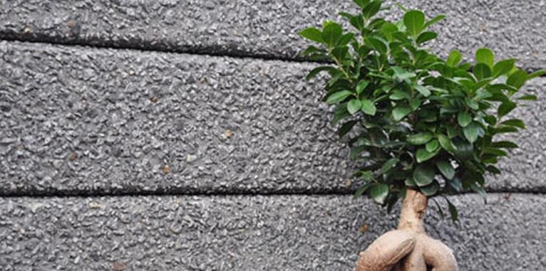 Bendigo Timber Blog